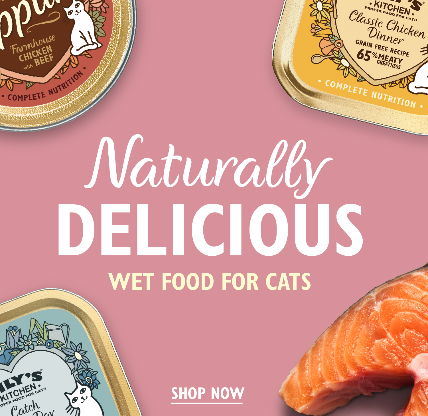 Wet Food for Cats