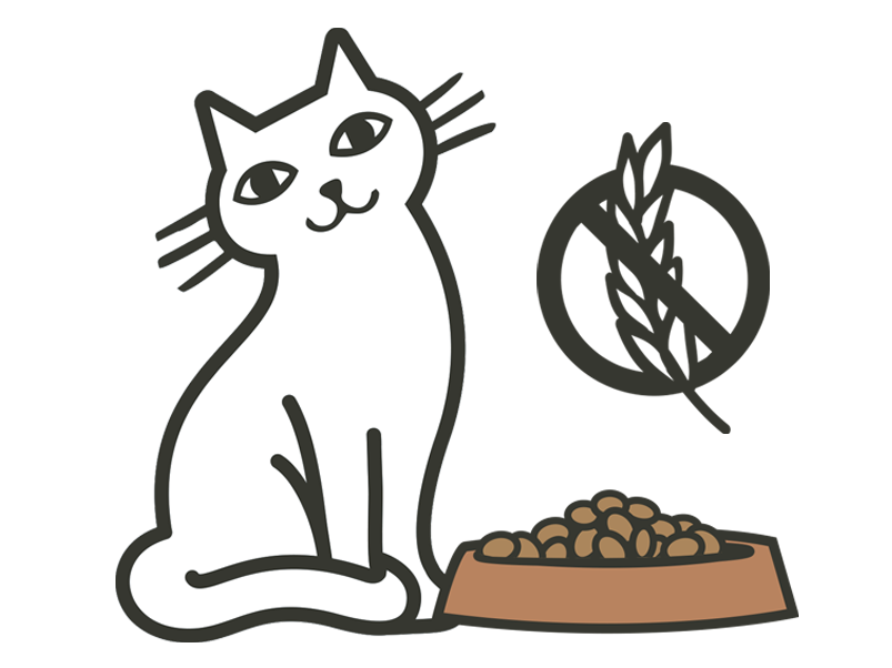 cat's guide to grain free diets