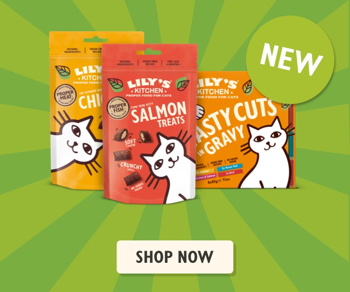 New Cat Products