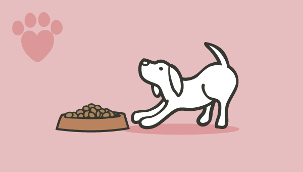 Feeding your puppy image