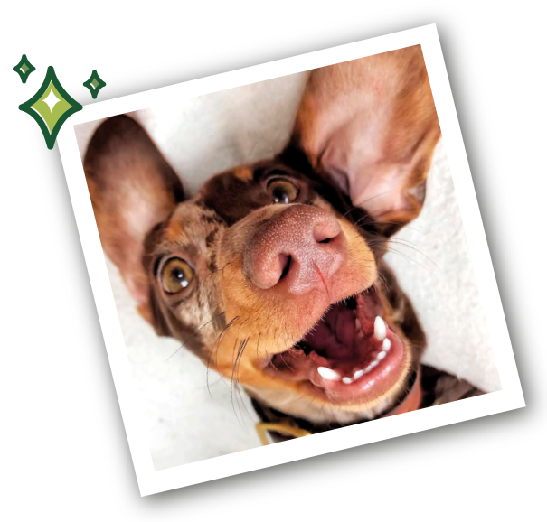 dogs with healthy teeth