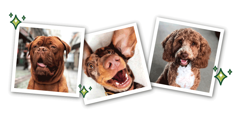 dogs with healthy teeth'