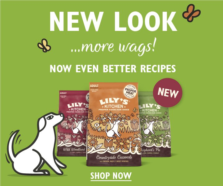 New Dog Dry Food