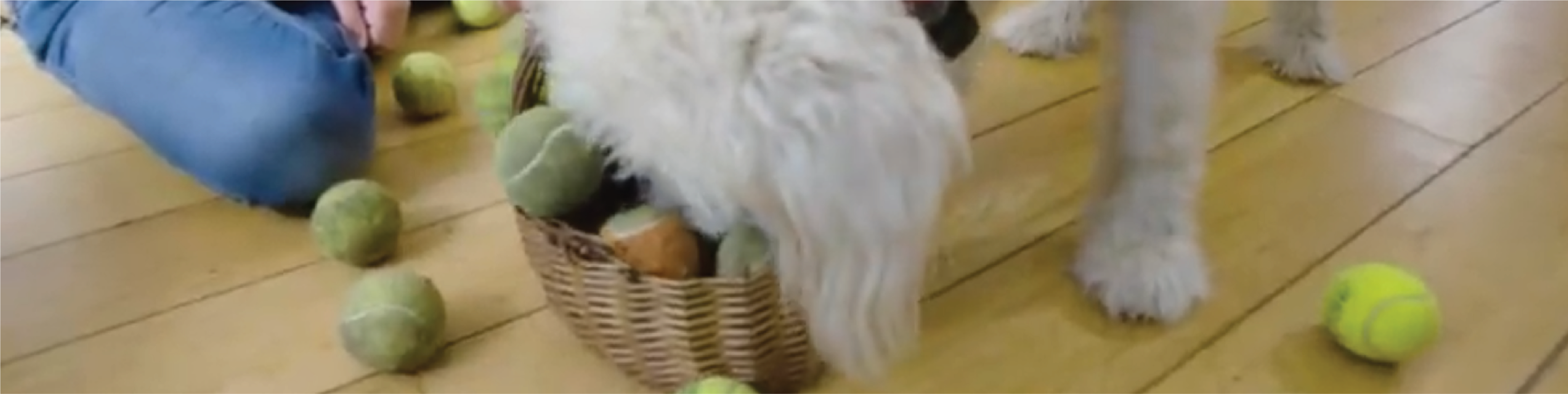Dog finding a treat during a dog treat game
